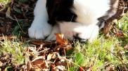 Vive les feuilles